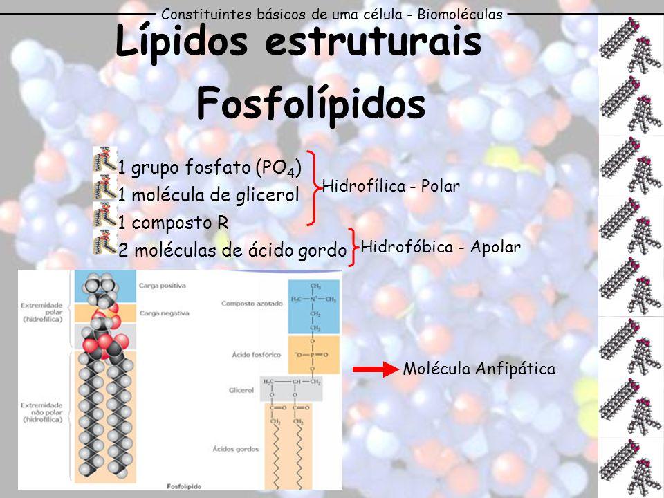Constituintes básicos de uma célula - Biomoléculas Lípidos estruturais Fosfolípidos 1 grupo fosfato (PO 4 ) 1 molécula de glicerol 1 composto R 2 molé