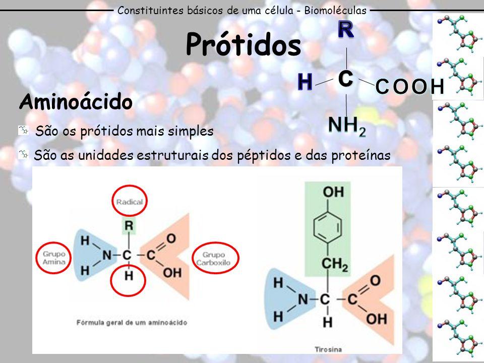 Constituintes básicos de uma célula - Biomoléculas Aminoácido São os prótidos mais simples São as unidades estruturais dos péptidos e das proteínas Pr