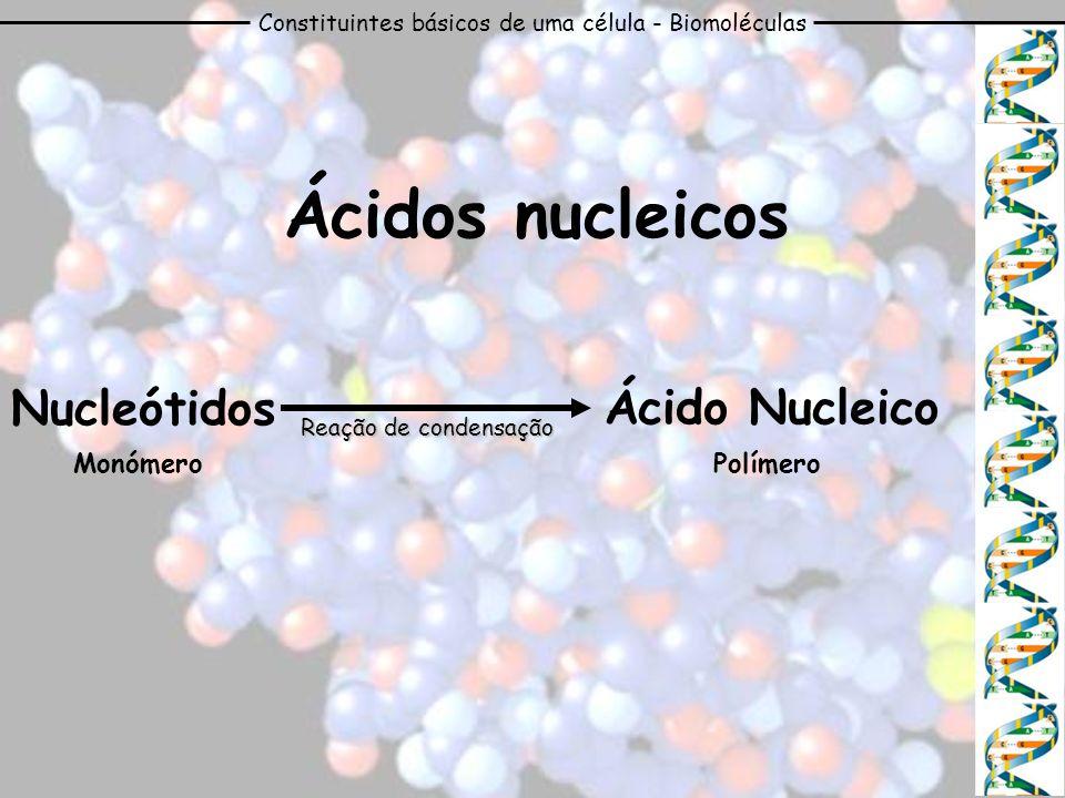 Constituintes básicos de uma célula - Biomoléculas Ácidos nucleicos PolímeroMonómero Nucleótidos Ácido Nucleico Reação de condensação