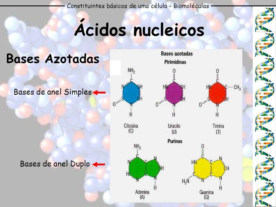 Constituintes básicos de uma célula - Biomoléculas Ácidos nucleicos Bases Azotadas Bases de anel Simples Bases de anel Duplo
