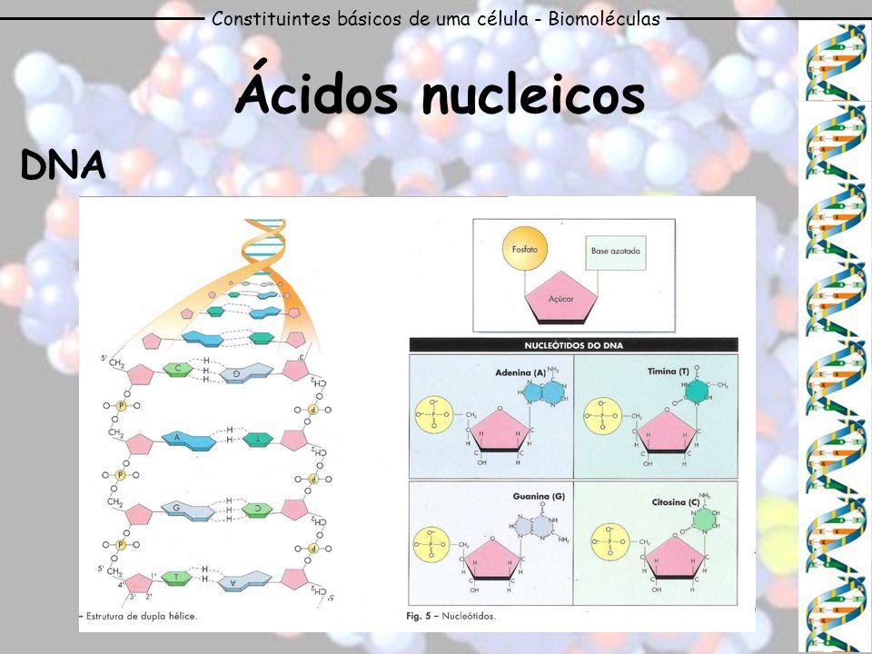 Constituintes básicos de uma célula - Biomoléculas Ácidos nucleicos DNA