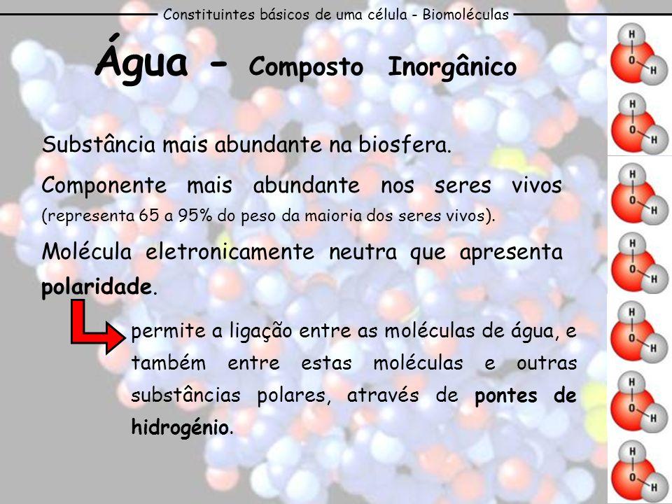 Constituintes básicos de uma célula - Biomoléculas Água - Composto Inorgânico Substância mais abundante na biosfera. Componente mais abundante nos ser