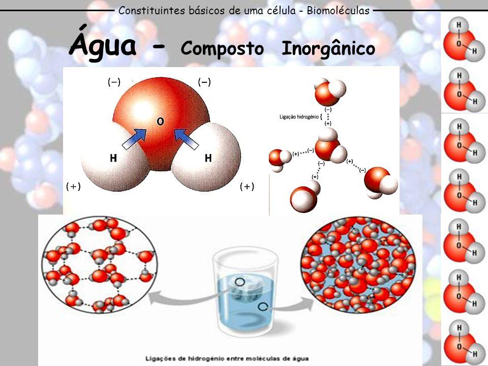 Constituintes básicos de uma célula - Biomoléculas Água - Composto Inorgânico No estado líquido as moléculas estão em constante movimento, as pontes estabelecem-se e desfazem-se constantemente