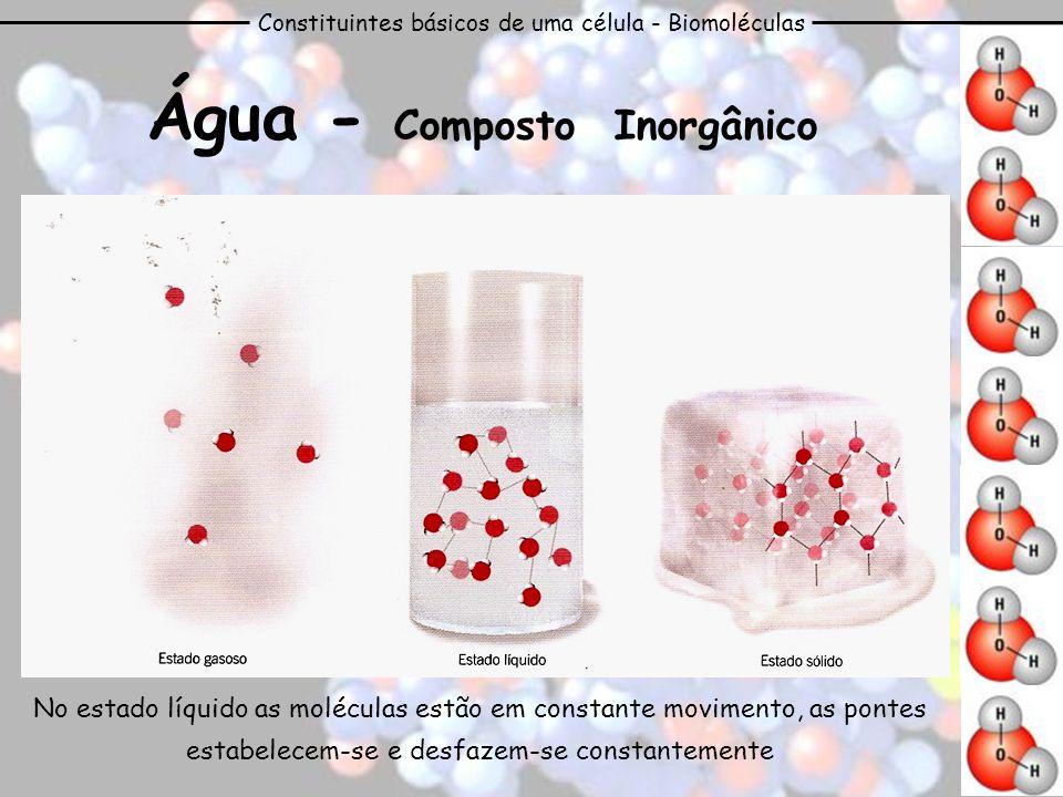 Constituintes básicos de uma célula - Biomoléculas Água - Composto Inorgânico A polaridade contribui para o grande poder solvente - as moléculas são capazes de estabelecer ligações com diversos iões, formando compostos mais estáveis.