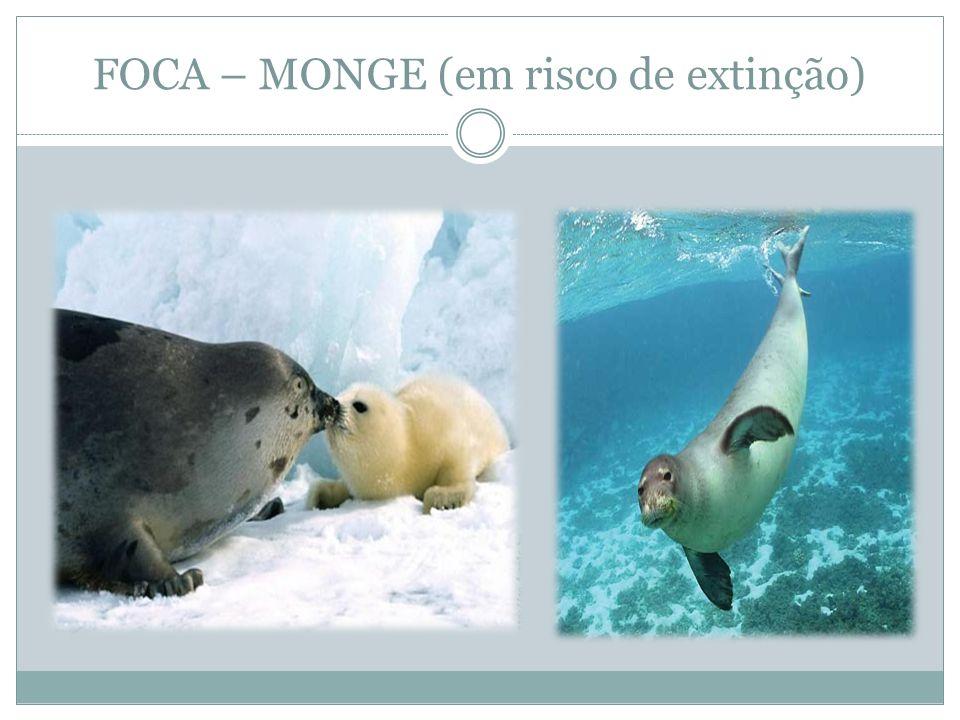 FOCA – MONGE (em risco de extinção)
