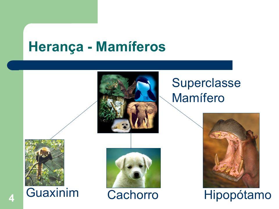 4 Herança - Mamíferos Superclasse Mamífero HipopótamoCachorro Guaxinim