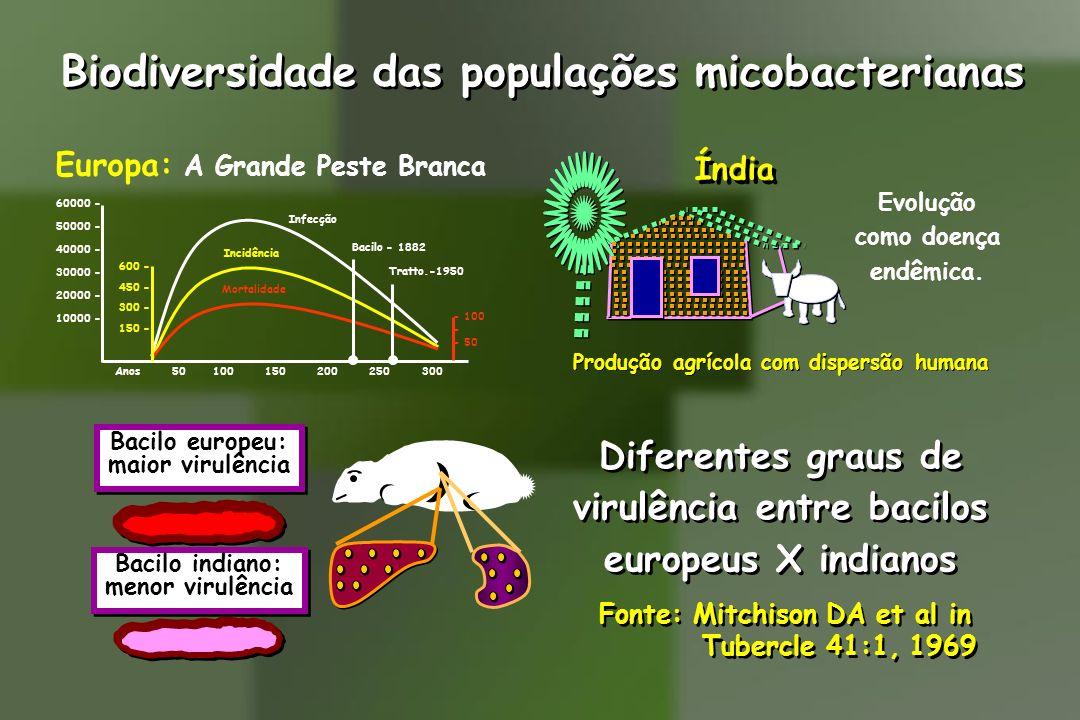 Biodiversidade das populações micobacterianas Evolução como doença endêmica. Produção agrícola com dispersão humana Índia Europa: A Grande Peste Branc