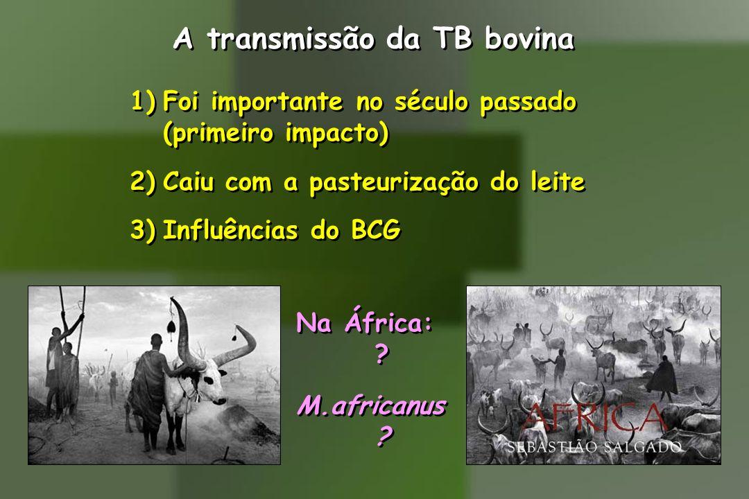 A transmissão da TB bovina 1)Foi importante no século passado (primeiro impacto) 2)Caiu com a pasteurização do leite 3)Influências do BCG Na África: ?