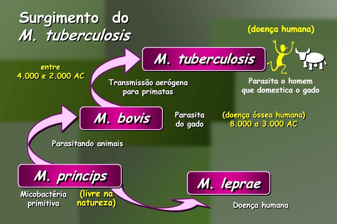 Surgimento do M. tuberculosis Surgimento do M. tuberculosis Transmissão aerógena para primatas Transmissão aerógena para primatas entre 4.000 e 2.000