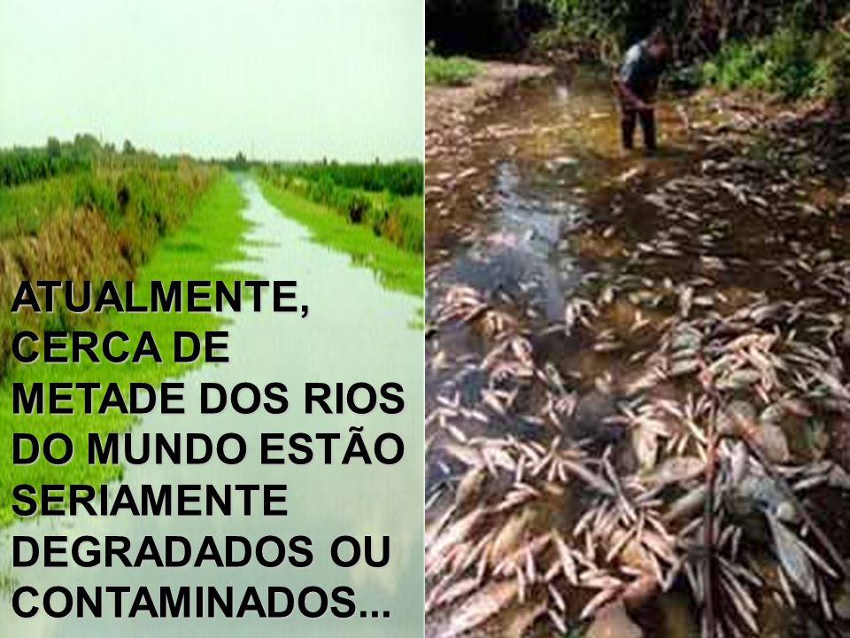 ATUALMENTE, CERCA DE METADE DOS RIOS DO MUNDO ESTÃO SERIAMENTE DEGRADADOS OU CONTAMINADOS...