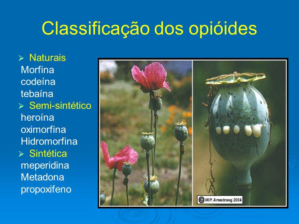 Classificação dos opióides Naturais Morfina codeína tebaína Semi-sintético heroína oximorfina Hidromorfina Sintética meperidina Metadona propoxifeno