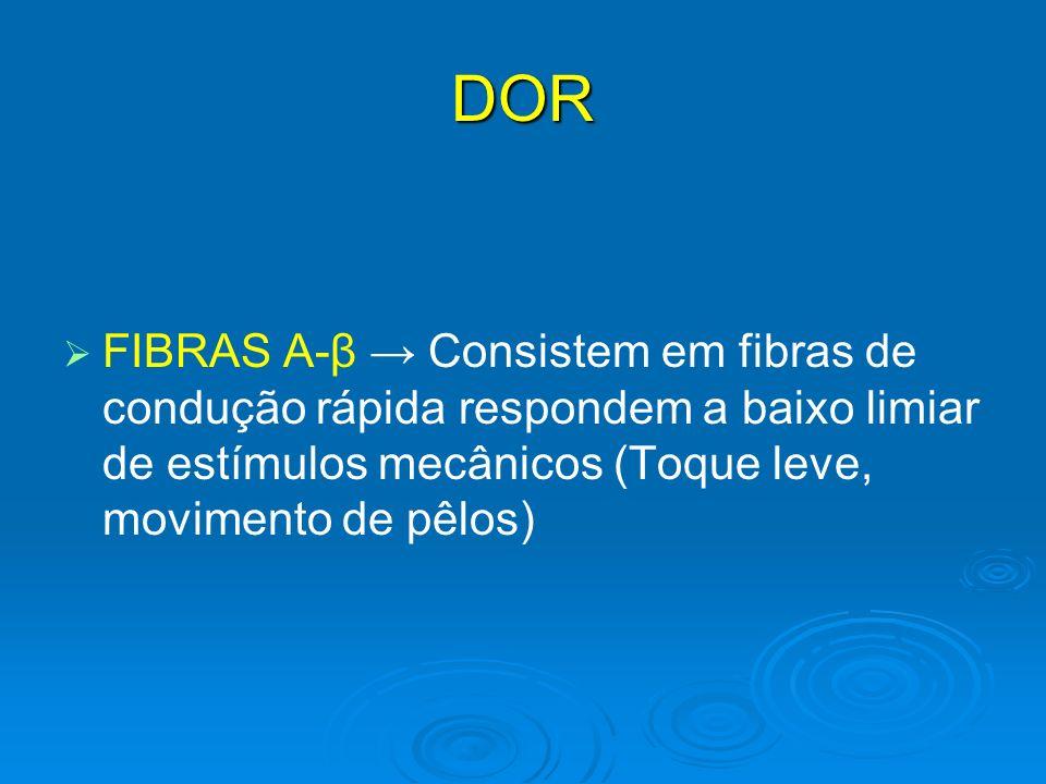 DOR FIBRAS A-β Consistem em fibras de condução rápida respondem a baixo limiar de estímulos mecânicos (Toque leve, movimento de pêlos)