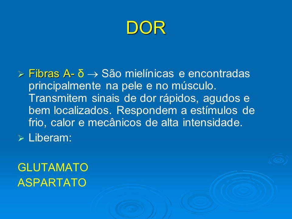 DOR Fibras A- Fibras A- δ São mielínicas e encontradas principalmente na pele e no músculo. Transmitem sinais de dor rápidos, agudos e bem localizados