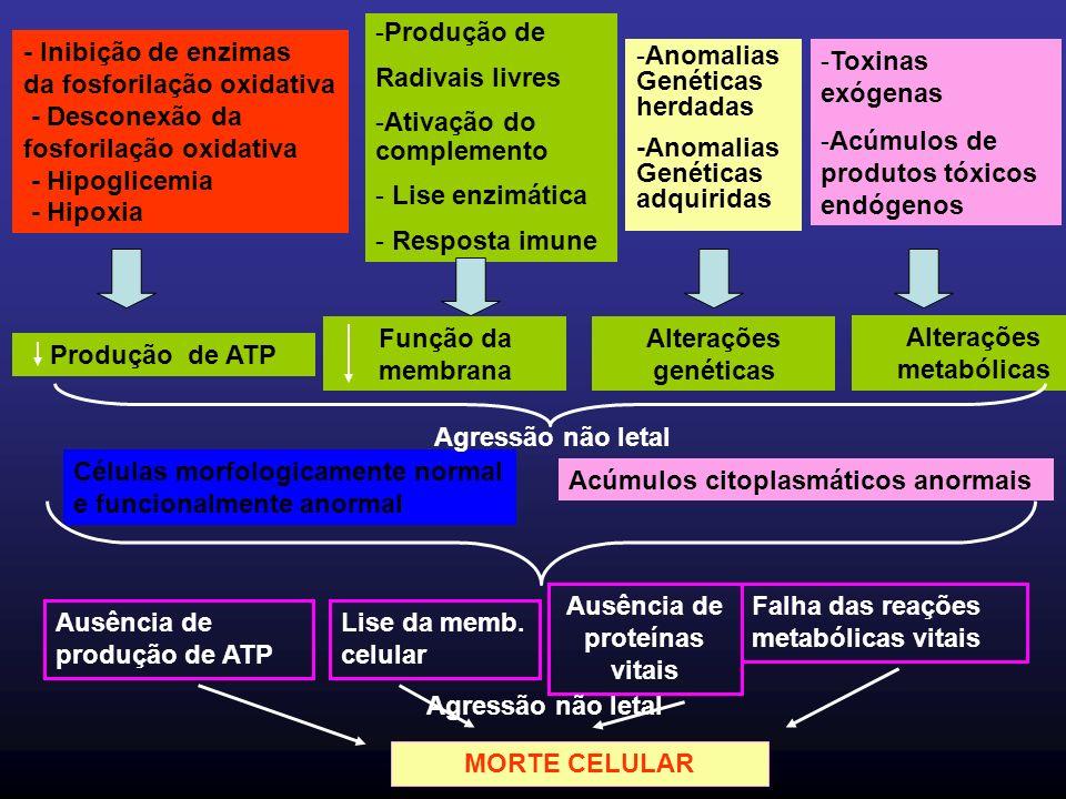 - Inibição de enzimas da fosforilação oxidativa - Desconexão da fosforilação oxidativa - Hipoglicemia - Hipoxia Produção de ATP -Produção de Radivais livres -Ativação do complemento - Lise enzimática - Resposta imune Função da membrana -Anomalias Genéticas herdadas -Anomalias Genéticas adquiridas -Toxinas exógenas -Acúmulos de produtos tóxicos endógenos Alterações genéticas Alterações metabólicas Células morfologicamente normal e funcionalmente anormal Acúmulos citoplasmáticos anormais Ausência de produção de ATP Lise da memb.