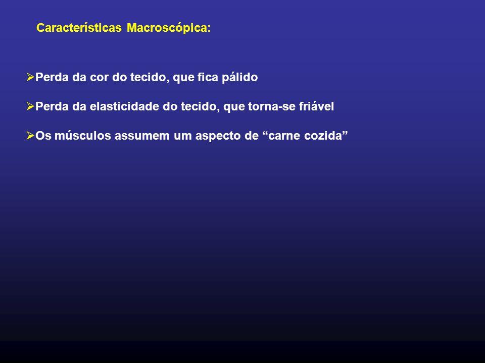 Características Macroscópica: Perda da cor do tecido, que fica pálido Perda da elasticidade do tecido, que torna-se friável Os músculos assumem um aspecto de carne cozida