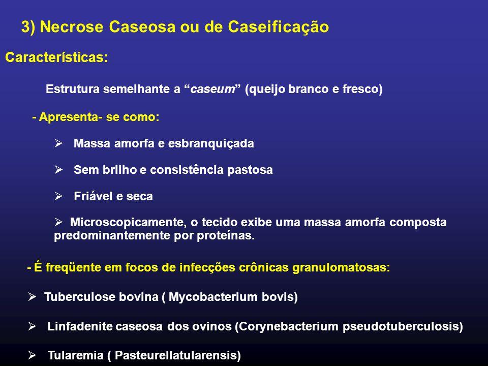 Características: Estrutura semelhante a caseum (queijo branco e fresco) - Apresenta- se como: Massa amorfa e esbranquiçada Sem brilho e consistência p