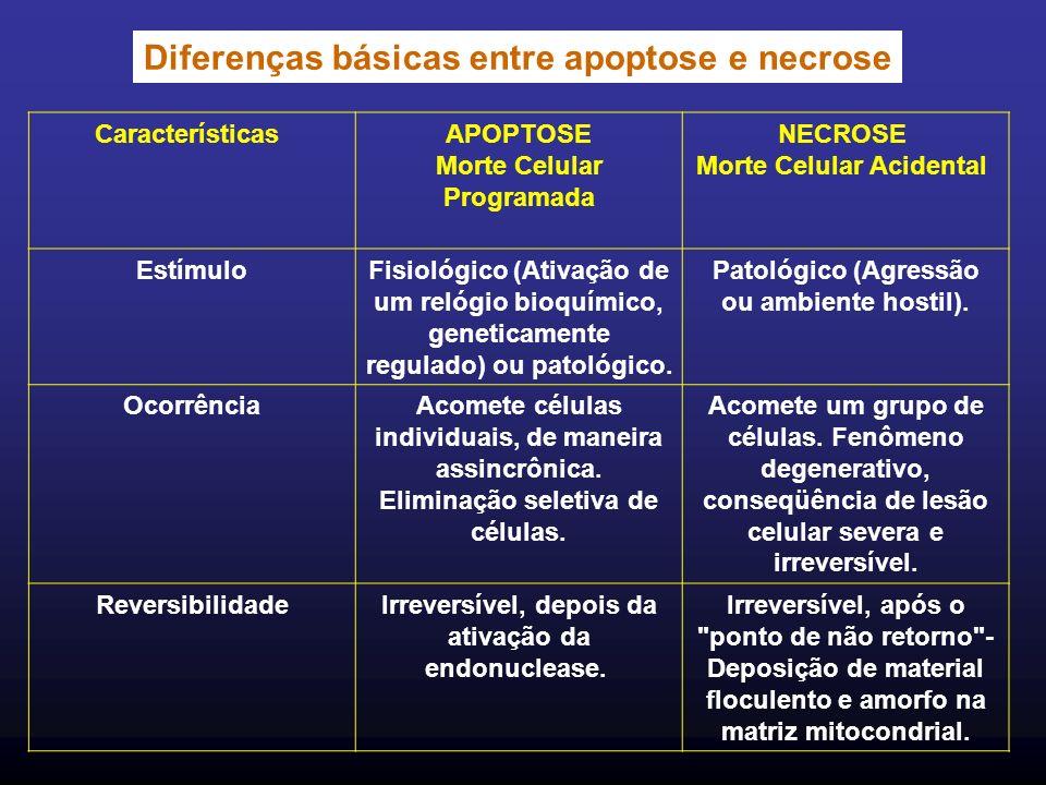 Diferenças básicas entre apoptose e necrose Características APOPTOSE Morte Celular Programada NECROSE Morte Celular Acidental Estímulo Fisiológico (Ativação de um relógio bioquímico, geneticamente regulado) ou patológico.