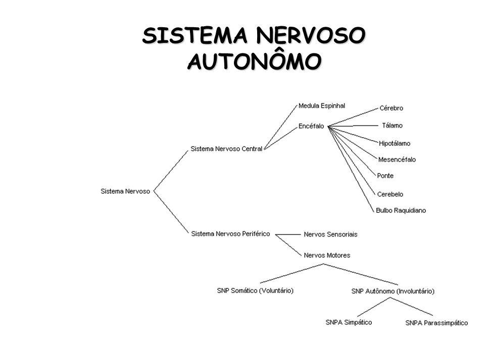 SISTEMA NERVOSO AUTONÔMO