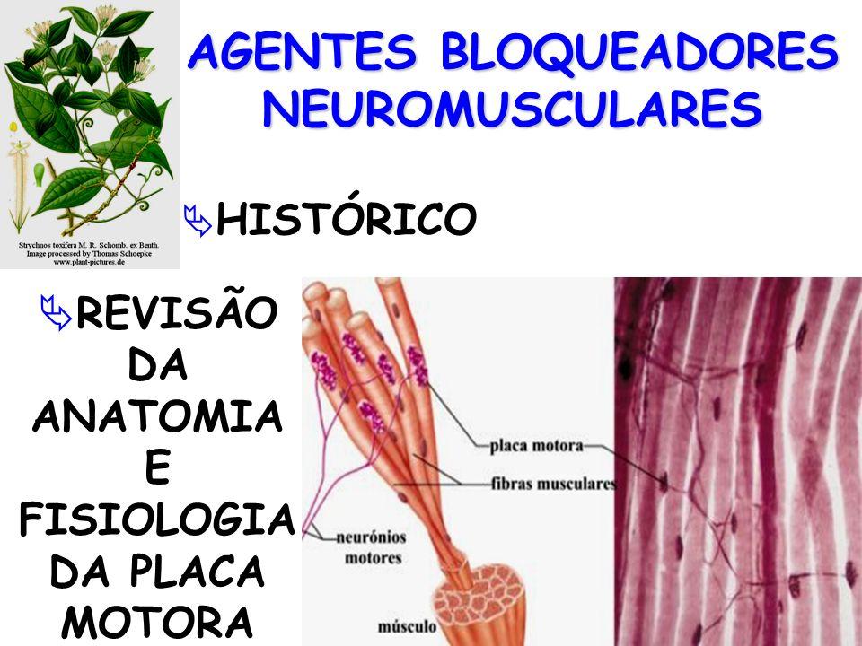AGENTES BLOQUEADORES NEUROMUSCULARES HISTÓRICO REVISÃO DA ANATOMIA E FISIOLOGIA DA PLACA MOTORA