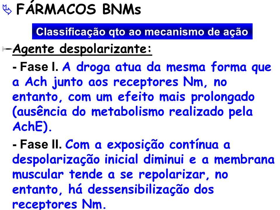 FÁRMACOS BNMs Agente despolarizante: - Fase I. A droga atua da mesma forma que a Ach junto aos receptores Nm, no entanto, com um efeito mais prolongad