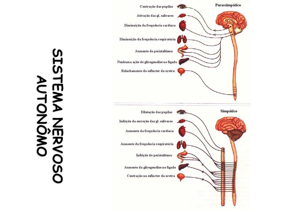 Antagonista não-seletivos dos receptores adrenérgicos Usos terapêuticos Hipertensão arterial crônica ou aguda Representantes e Farmacocinética CARVEDILOL (coreg®) VO Efeitos adversos Hipotensão excessiva Supressão nervosa noradrenérgica