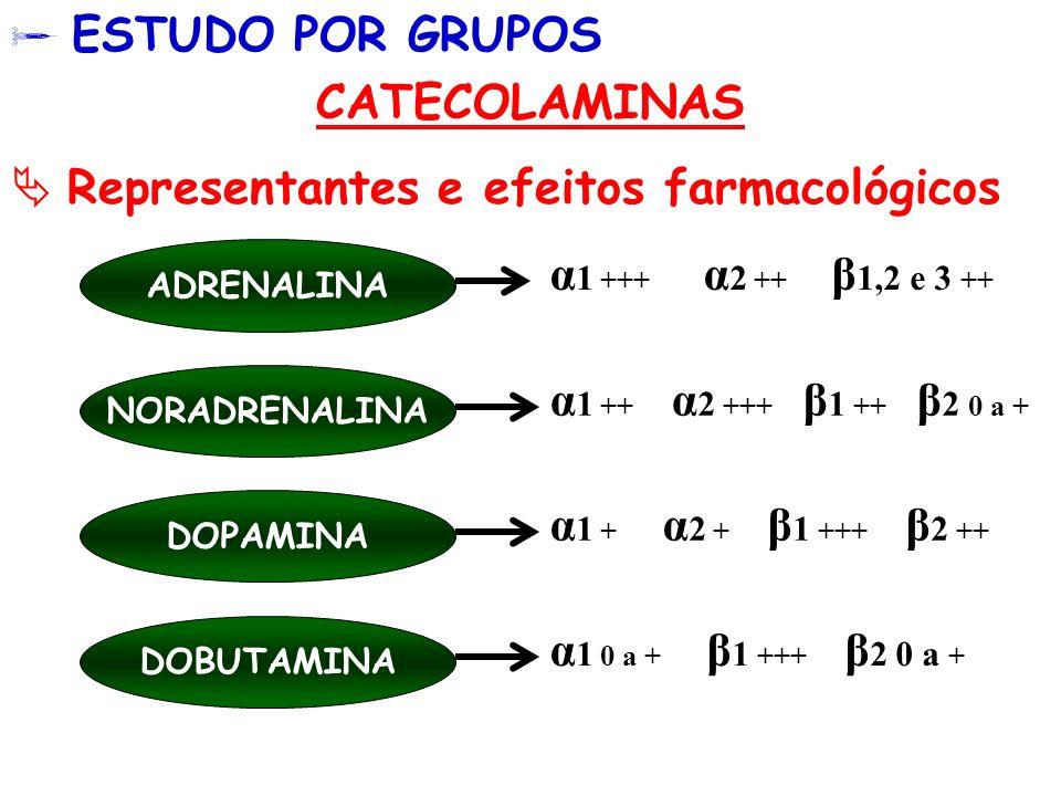 ESTUDO POR GRUPOS CATECOLAMINAS Representantes e efeitos farmacológicos ADRENALINA NORADRENALINA α 1 +++ α 2 ++ β 1,2 e 3 ++ α 1 ++ α 2 +++ β 1 ++ β 2