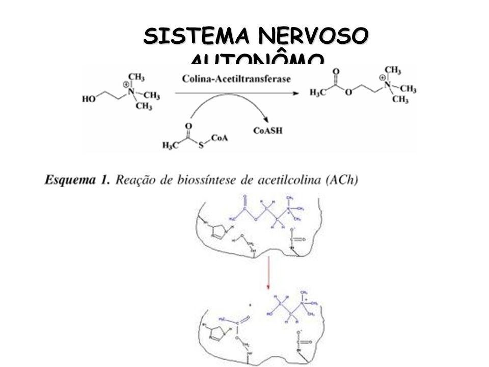 Antagonista não-seletivo dos receptores α Usos terapêuticos Controle de episódios hipertensivos agudos provocadas por simpaticomiméticos Feocromocitoma Disfunção erétil Representantes e Farmacocinética FENTOLAMINA (vigamed®) – VO (IMIDAZOLINA)