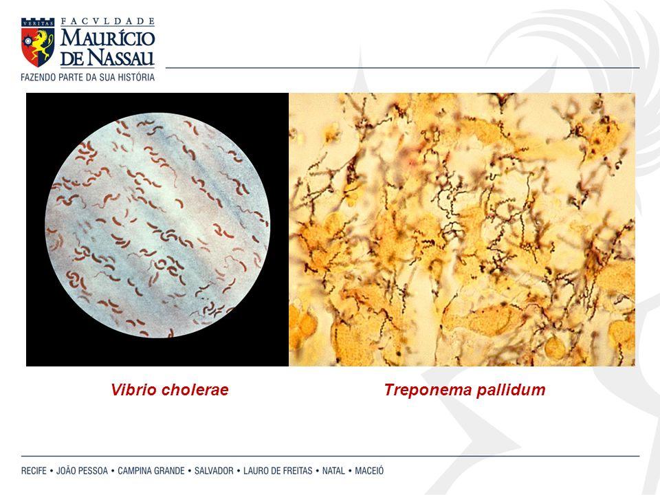 Vibrio choleraeTreponema pallidum