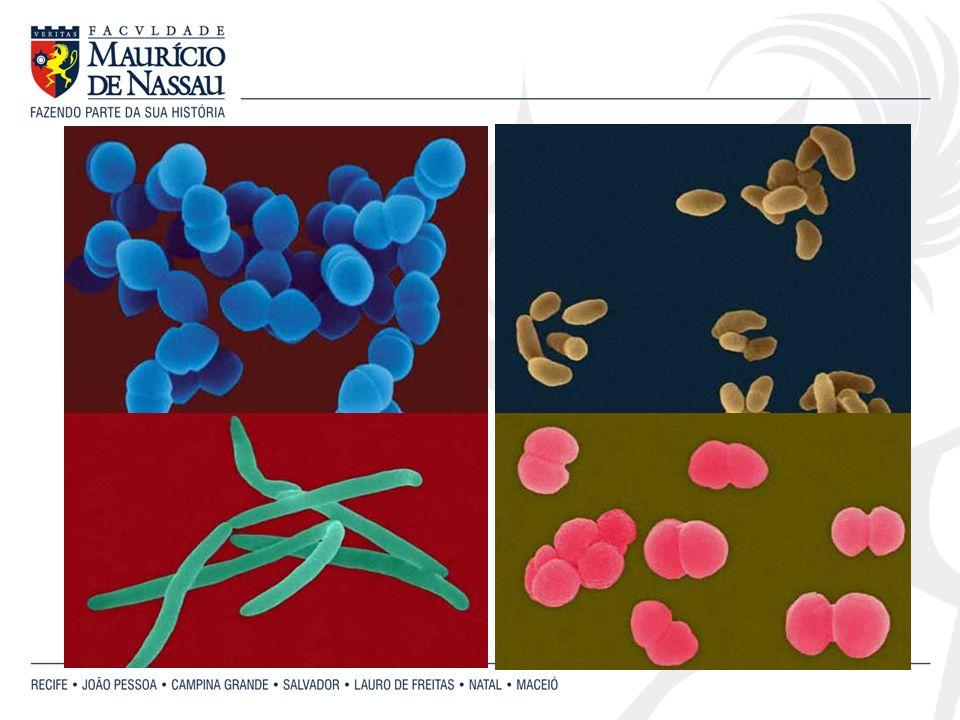 Bactérias espirais Vibrião Espirilo Espiroqueta