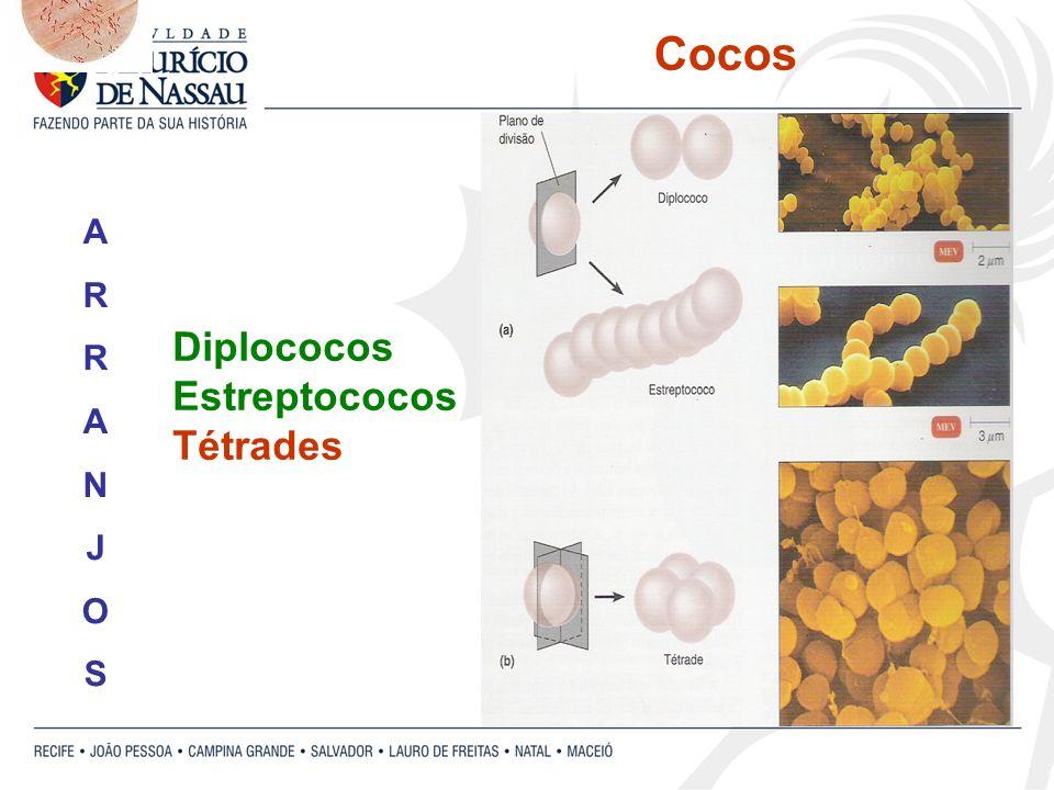 Cocos Diplococos Estreptococos Tétrades ARRANJOSARRANJOS