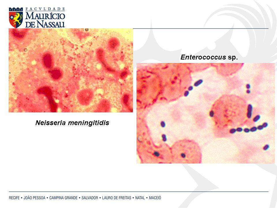 Neisseria meningitidis Enterococcus sp.