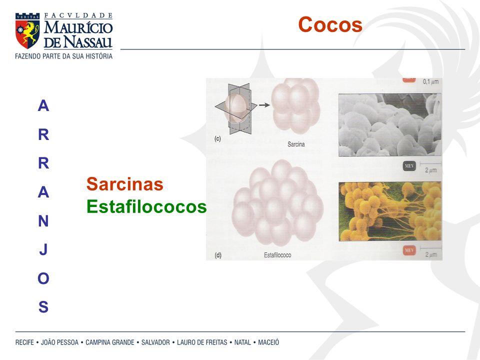 Sarcinas Estafilococos ARRANJOSARRANJOS Cocos