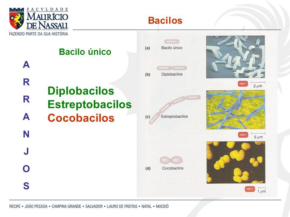 Bacilos Diplobacilos Estreptobacilos Cocobacilos ARRANJOSARRANJOS Bacilo único