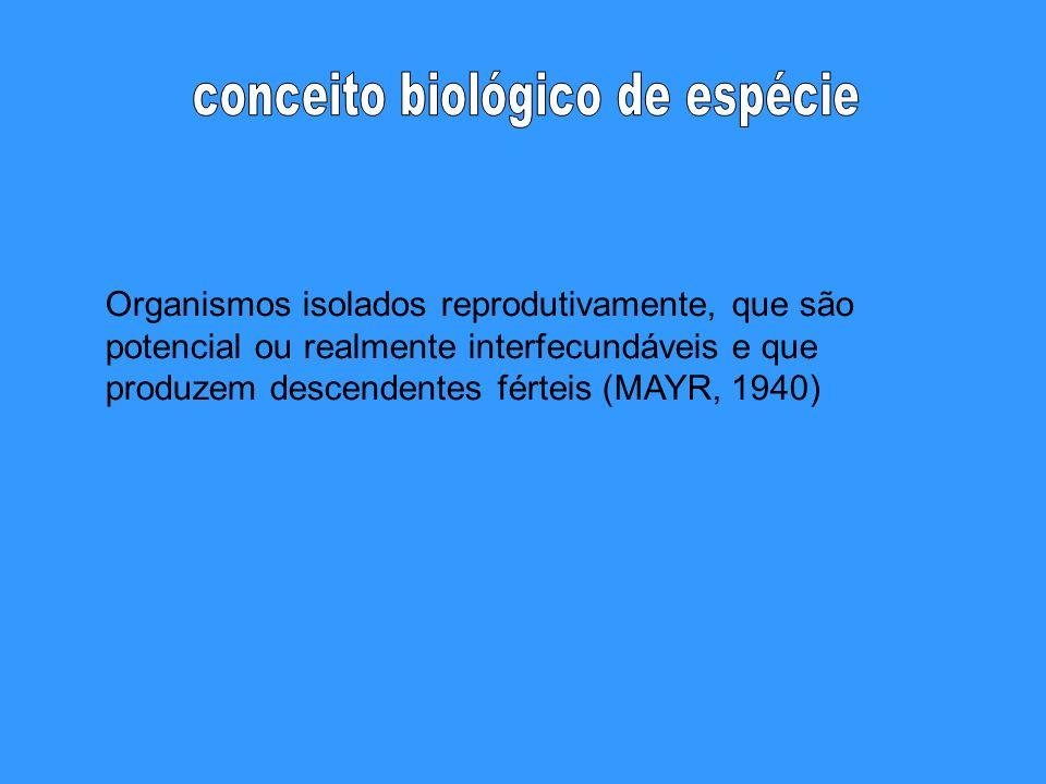 Organismos isolados reprodutivamente, que são potencial ou realmente interfecundáveis e que produzem descendentes férteis (MAYR, 1940)