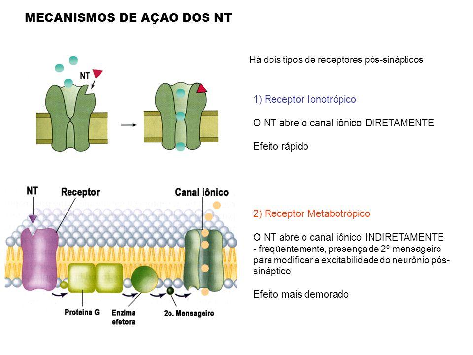 1) Receptor Ionotrópico O NT abre o canal iônico DIRETAMENTE Efeito rápido 2) Receptor Metabotrópico O NT abre o canal iônico INDIRETAMENTE - freqüent