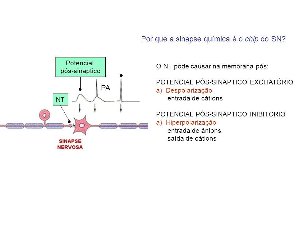 PA Potencial pós-sinaptico NT Por que a sinapse química é o chip do SN? O NT pode causar na membrana pós: POTENCIAL PÓS-SINAPTICO EXCITATÓRIO a)Despol