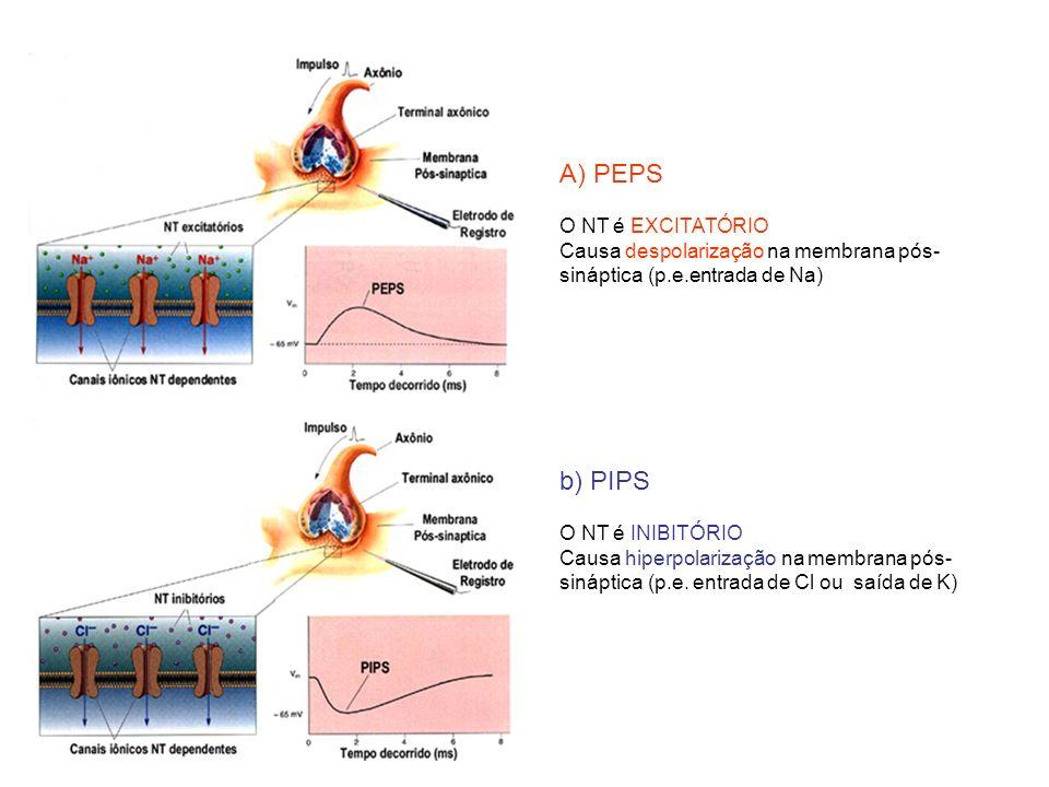 A) PEPS O NT é EXCITATÓRIO Causa despolarização na membrana pós- sináptica (p.e.entrada de Na) b) PIPS O NT é INIBITÓRIO Causa hiperpolarização na mem