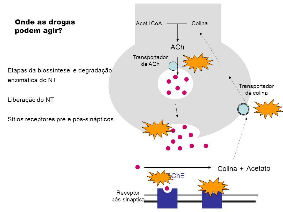 Acetil CoA Transportador de colina AChE Colina + Acetato Colina ACh Transportador de ACh Etapas da biossíntese e degradação enzimática do NT Liberação