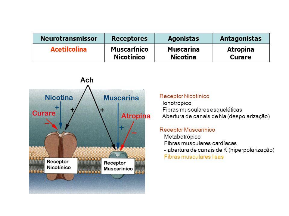 NeurotransmissorReceptoresAgonistasAntagonistas AcetilcolinaMuscarínico Nicotínico Muscarina Nicotina Atropina Curare Receptor Nicotínico Ionotrópico