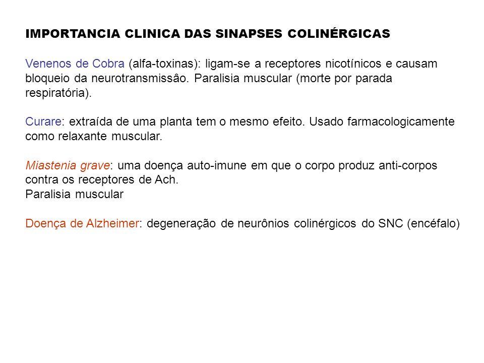 IMPORTANCIA CLINICA DAS SINAPSES COLINÉRGICAS Venenos de Cobra (alfa-toxinas): ligam-se a receptores nicotínicos e causam bloqueio da neurotransmissâo