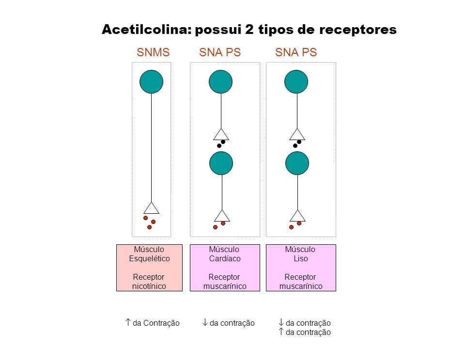 da contração SNA PSSNMS Acetilcolina: possui 2 tipos de receptores Músculo Cardíaco Receptor muscarínico Músculo Esquelético Receptor nicotínico da Co