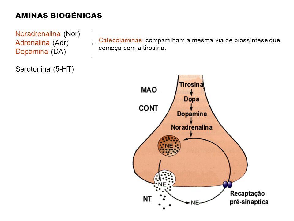 AMINAS BIOGÊNICAS Noradrenalina (Nor) Adrenalina (Adr) Dopamina (DA) Serotonina (5-HT) Catecolaminas: compartilham a mesma via de biossíntese que come
