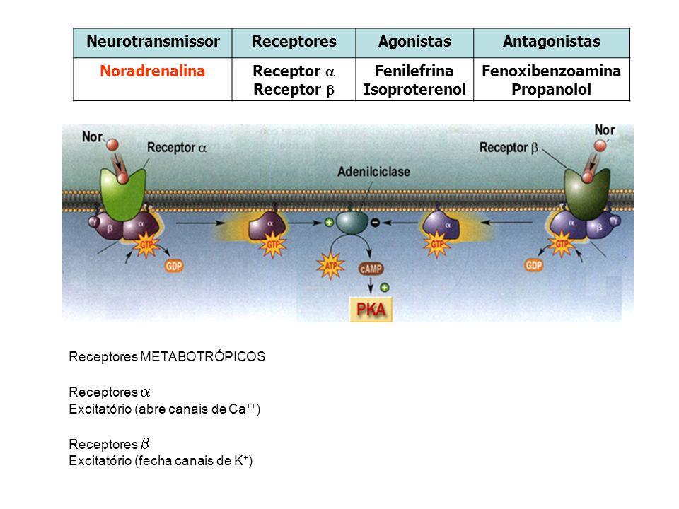 NeurotransmissorReceptoresAgonistasAntagonistas Noradrenalina Receptor Fenilefrina Isoproterenol Fenoxibenzoamina Propanolol Receptores METABOTRÓPICOS