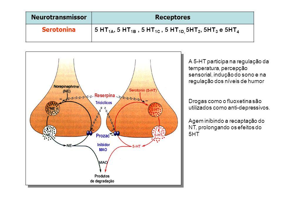 NeurotransmissorReceptores Serotonina 5 HT 1A, 5 HT 1B, 5 HT 1C, 5 HT 1D, 5HT 2, 5HT 3 e 5HT 4 A 5-HT participa na regulação da temperatura, percepção