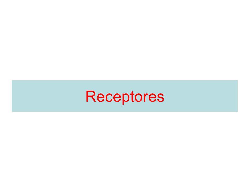 NeurotransmissorReceptoresAgonistasAntagonistas Noradrenalina Receptor Fenilefrina Isoproterenol Fenoxibenzoamina Propanolol Receptores METABOTRÓPICOS Receptores Excitatório (abre canais de Ca ++ ) Receptores Excitatório (fecha canais de K + )