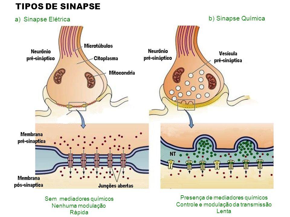 a)Sinapse Elétrica Presença de mediadores químicos Controle e modulação da transmissão Lenta Sem mediadores químicos Nenhuma modulação Rápida TIPOS DE