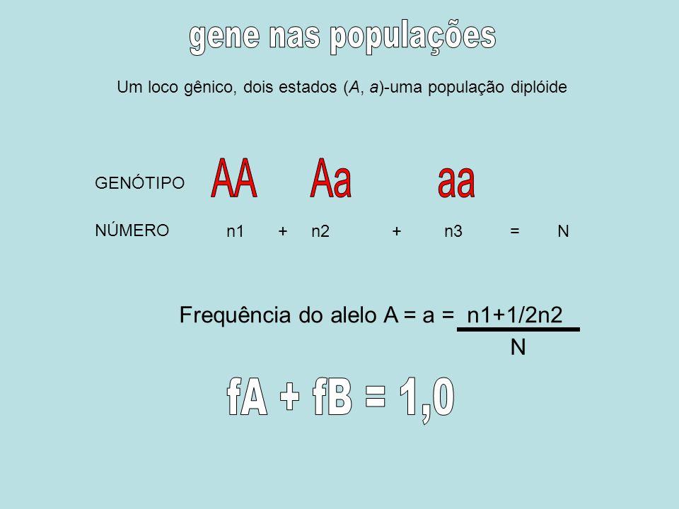 Um loco gênico, dois estados (A, a)-uma população diplóide n1 + n2 + n3 = N GENÓTIPO NÚMERO Frequência do alelo A = a = n1+1/2n2 N