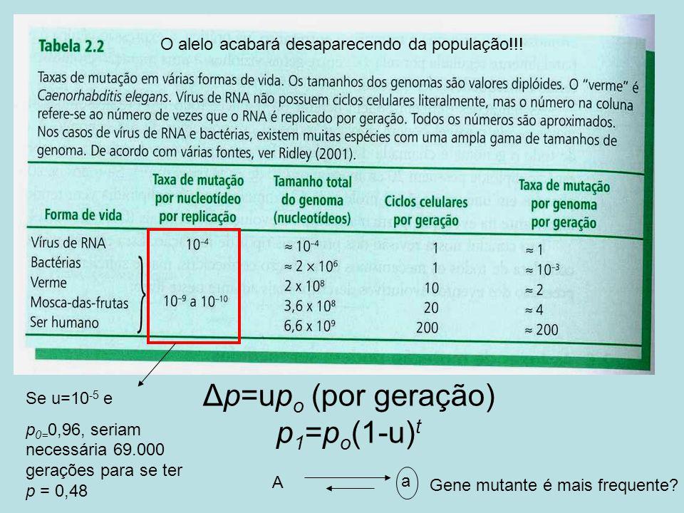 Δp=up o (por geração) p 1 =p o (1-u) t O alelo acabará desaparecendo da população!!! Se u=10 -5 e p 0= 0,96, seriam necessária 69.000 gerações para se