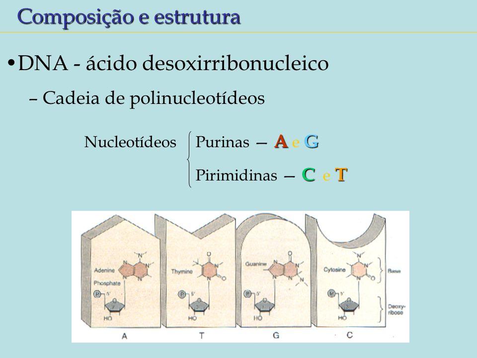 Composição e estrutura DNA - ácido desoxirribonucleico – Cadeia de polinucleotídeos AG Nucleotídeos Purinas A e G CT Pirimidinas C e T