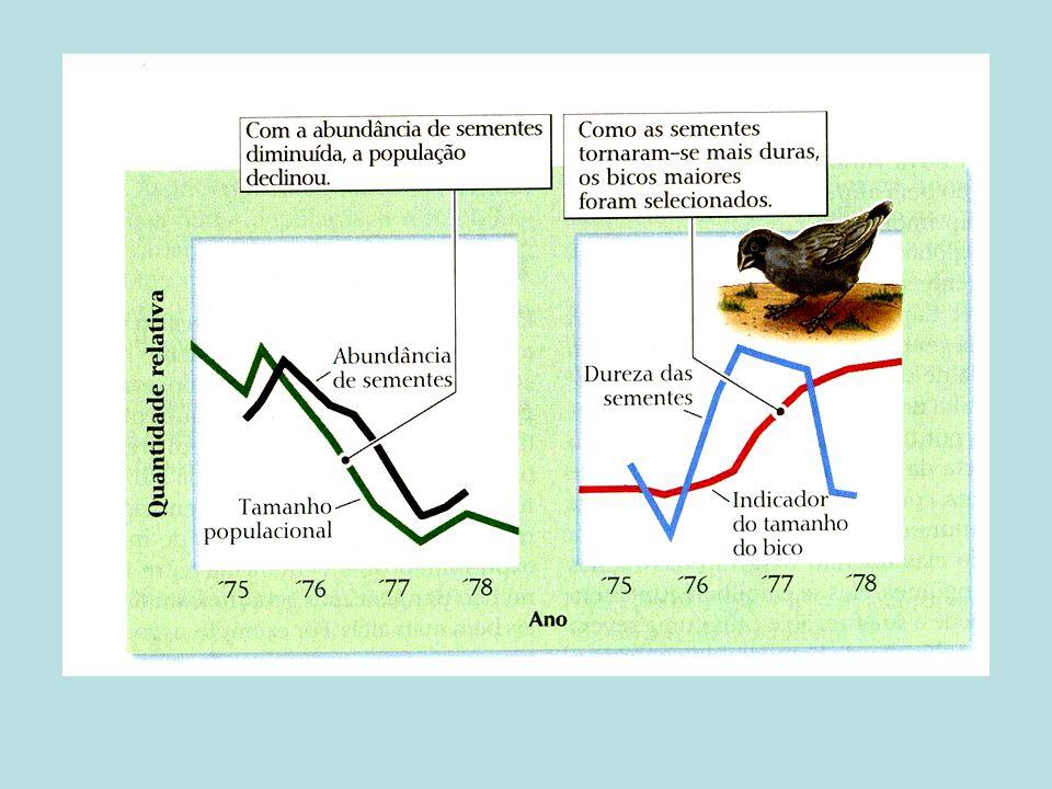 Plasticidade fenotípica e as mudanças ambientais